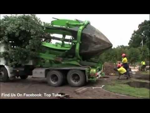 נטיעת עצים בעידן המודרני