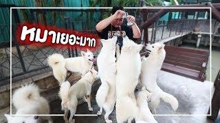 คาเฟ่หมาที่มีหมาเยอะที่สุดในไทย - เพลินพุง