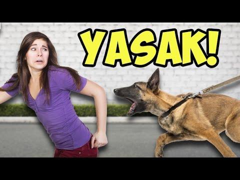 Bakılması Yasak Olan 12 Tehlikeli Köpek...
