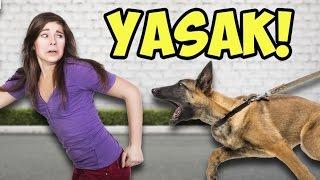 Bakılması Yasak Olan 12 Tehlikeli Köpek Irkı