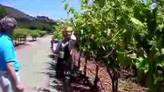 Winery Tour in Monterey County, California