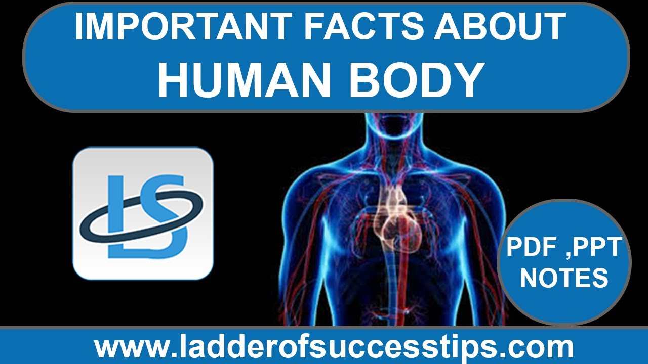 Human Body System Important Facts About Human Body Biology Notes