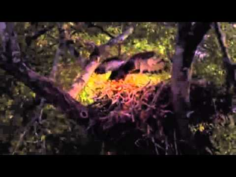 Africa Episode 2 Savannah with David Attenborough - Documentary