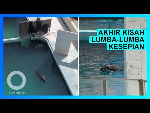 Lumba-lumba kesepian ini akhirnya mati di tank akuarium kecil di Jepang - TomoNews