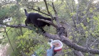 Bella's Rescue