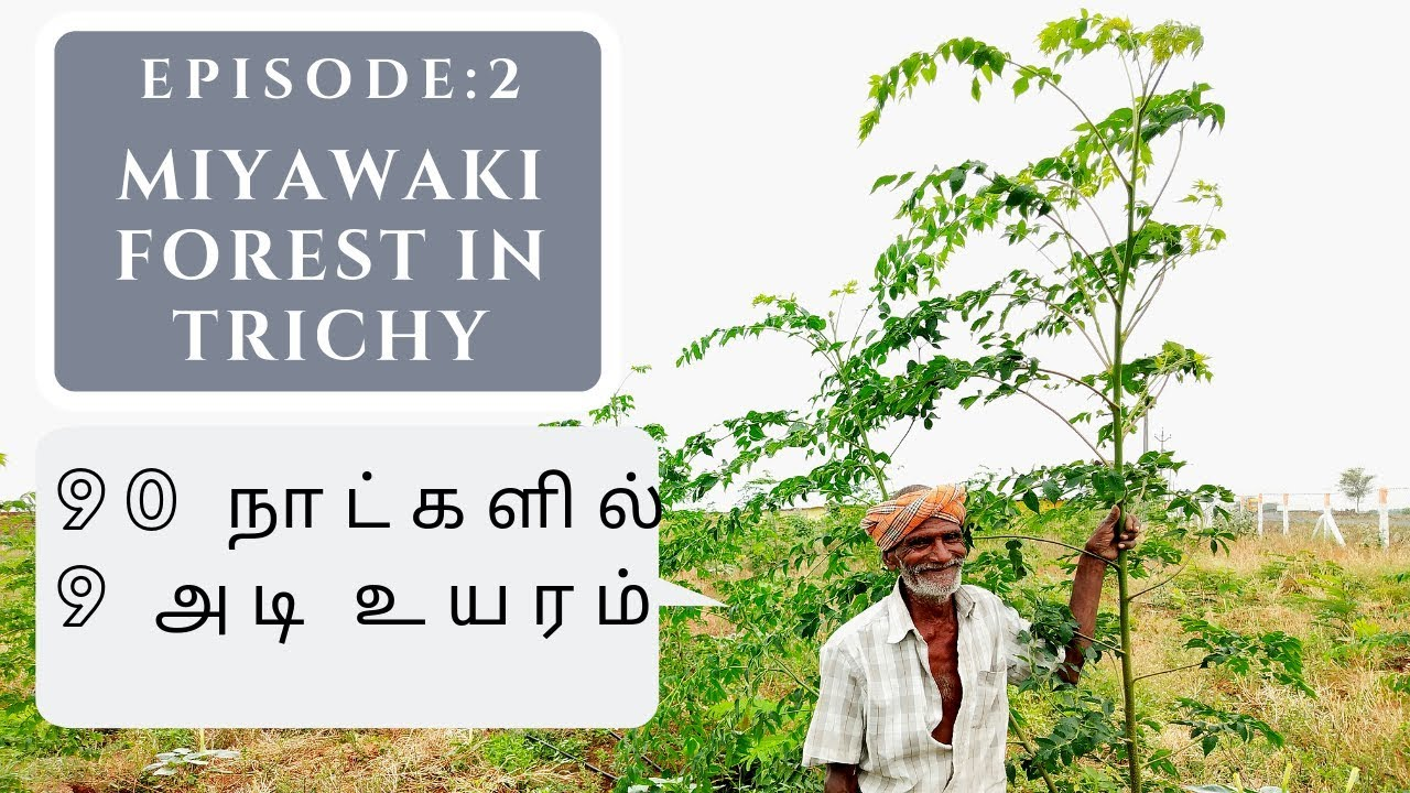 Unless we successfully restore the degraded sahel region, we won't attain many of the global goals we have set for ourselves. 90 Days Miyawaki Forest Tree Plantation In Trichy Tamil Nadu Youtube