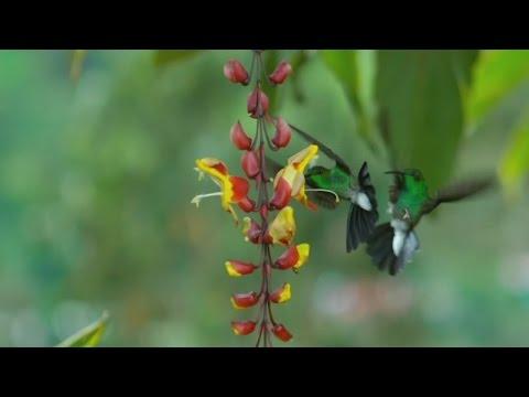 Science Cafe Finds New Details on High Desert Hummingbirds