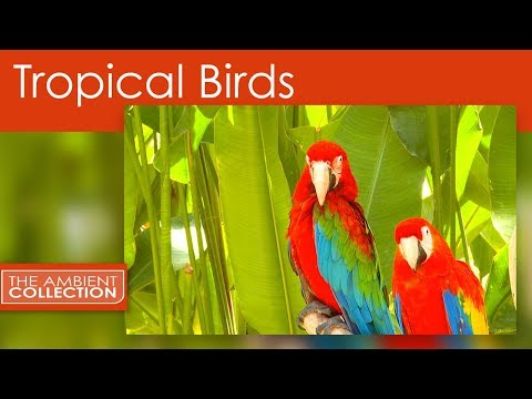 TROPICAL BIRDS with Orchids and Butterflies in Slow Motion with Nature Sounds