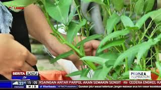 People and Inspiration: Pertanian Kota Anak SMA #1