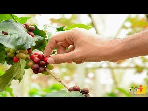 Clique e veja o vídeo Curso Passo a Passo para se Obter Café de Qualidade - Colheita - Cursos CPT