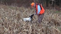 Pheasant Hunting with Pointers in Pennsylvania