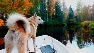 Поход в тайгу. Рыбалка. Сплав по реке. Закрытие сезона(Всем привет! В этом видео мы отправимся в осеннюю тайгу. В этом походе есть рыбалка, сплав по реке, стрельба..., 2016-10-17T20:26:55.000Z)