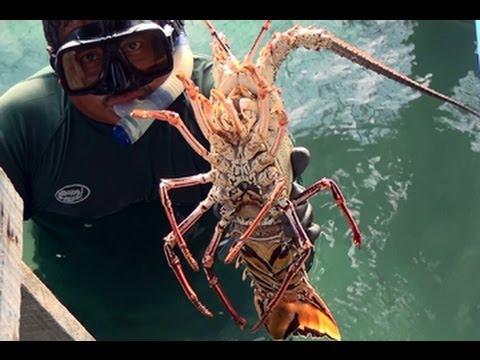 Lobster Fishermen of the Caribbean - Banco Chinchorro Mexico - YouTube HD