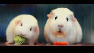 СМЕШНЫЕ ЖИВОТНЫЕ видео подборка FUNNY ANIMALS VIDEO