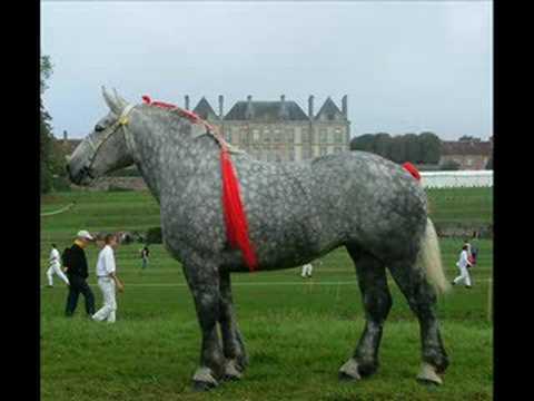 Hele mooie paarden foto 39 s youtube for Mooie voortuinen foto s