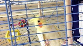 Игрушки ! Что в клетке попугая ? Необходимые предметы