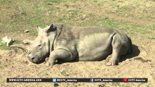 Northern white rhino died at San Diego Zoo