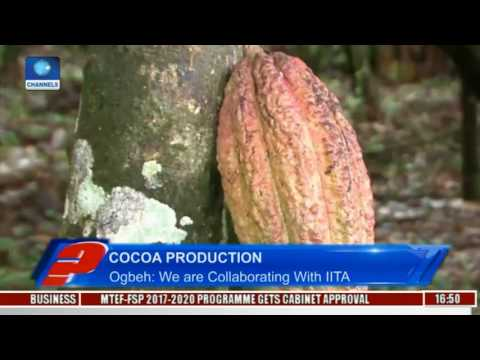 Audu Ogbeh Highlights Yam Export Alternatives Pt 3