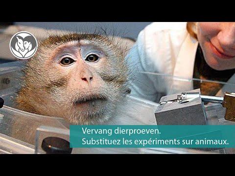 Werelddag laboratoriumdieren - Journée mondiale des animaux de laboratoire
