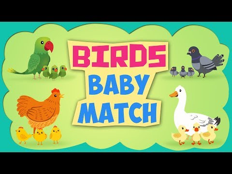 Learn Birds Baby Name - Learning Birds Baby name for Childre