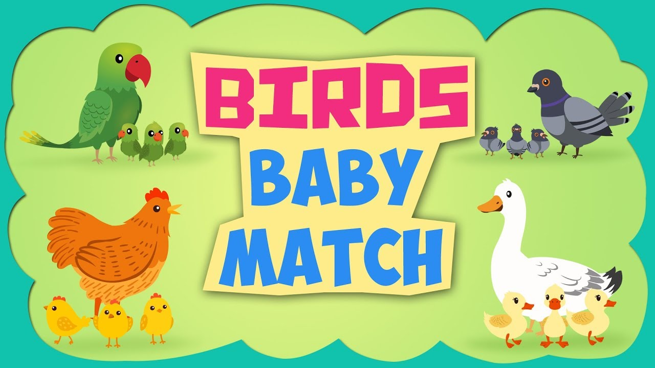 Learn Birds Baby Name - Learning Birds Baby name for Children - Popular  Nursery Rhymes by Kids Yogi