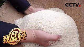 《致富经》打造有机高端米 稻田里的协奏曲 20200317   CCTV农业