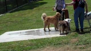 Grand Opening Of A Dog Park- 5-22-10