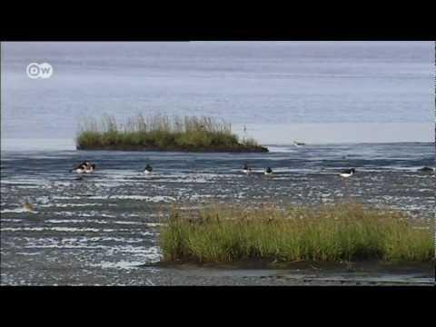 Das Wattenmeer in 60 Sec | UNESCO Welterbe
