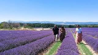 Lavender Essential Oil: Path to Product Quality   NOW Essential Oils
