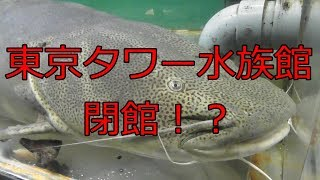 Shoegazer Aquariumの番外編 前から行きたかった東京タワー水族館。 営...