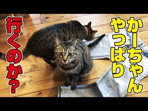 母の外出を薄々察知した猫さんたちをあやす父母!