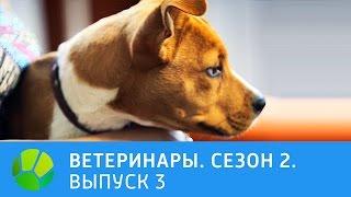 Ветеринары.  Хаски, крокодиловый варан, лисица-фенек. 2 сезон | Живая Планета