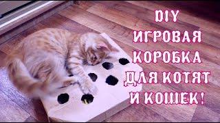 DIY Игровая коробка с шариками для котят и кошек!! The Alice Twins #19