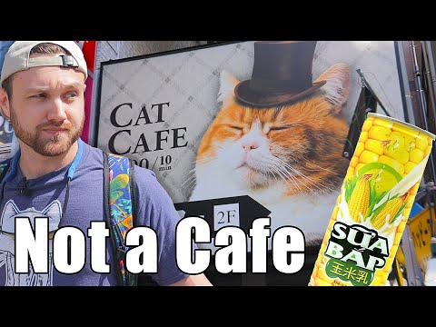 Japanese Cafe - Heaven For Cat Devotees