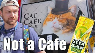 I Drank Corn Juice At A Cat Cafe