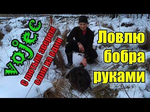 Ловля бобра зимой руками / Охота без капканов