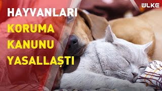'Hayvanları Koruma Kanunu' Meclis'ten geçti!