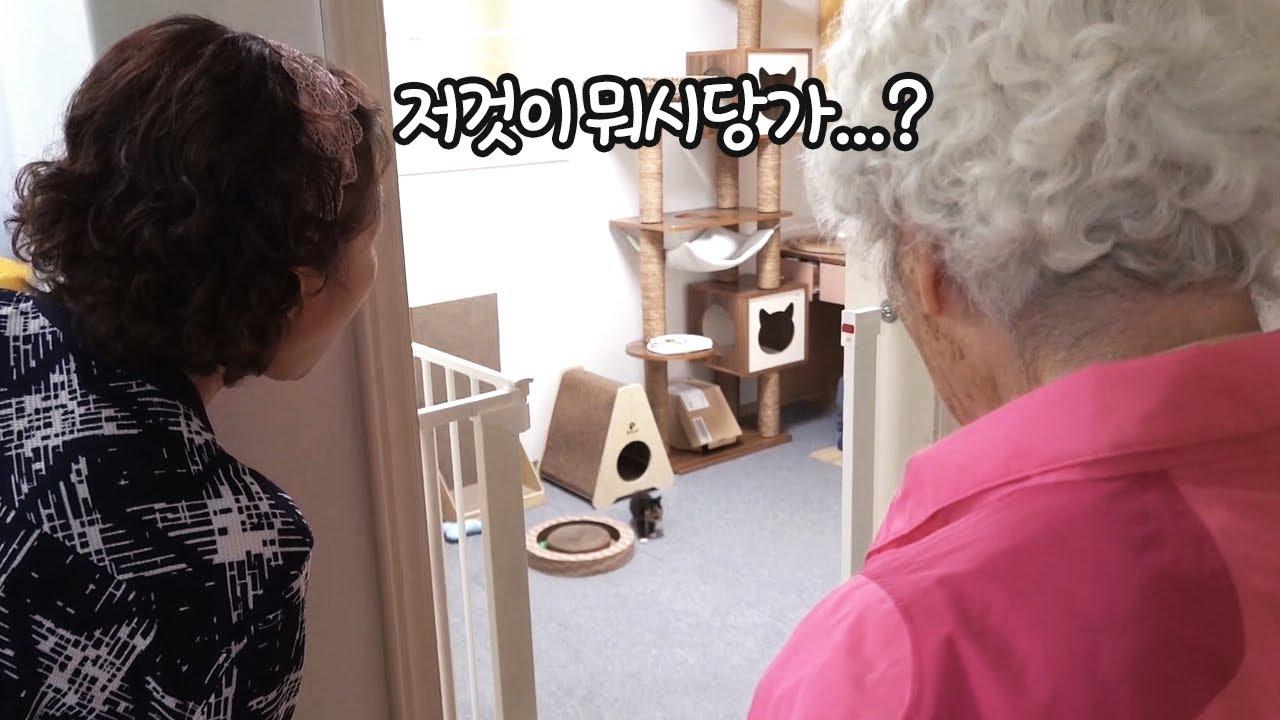 고양이는 요물이라 싫다던 할머니 결국...