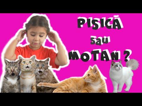 CUM AI GRIJĂ DE PISICĂ?😼 Educație, alimentație, baie si multă dragoste.😻 Video educativ pentru copii from YouTube · Duration:  5 minutes 54 seconds