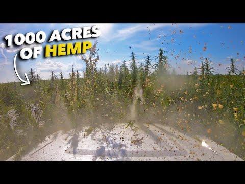 Hemp Field OFF ROADING – 1,000 acres of Indiana Hemp!