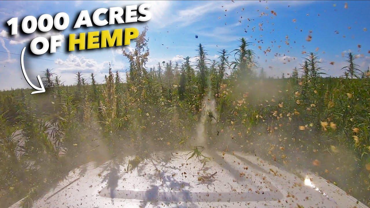 Hemp Field OFF ROADING - 1,000 acres of Indiana Hemp!