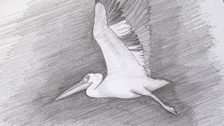 Draw a Flying Pelican - DIY Crafts - Guidecentral