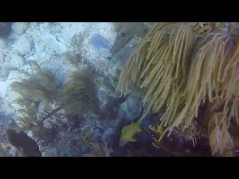 Molasses Reef First Scuba Diving Experience GoPro