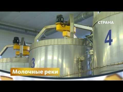 "Молочное производство | Бизнес | Телеканал ""Страна"""