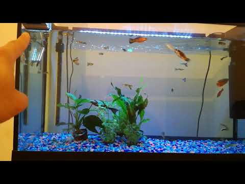 How to keep fish-tank aquarium glass crystal clean