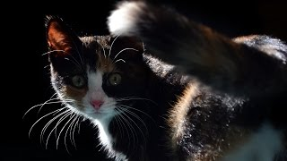 Is Your Male Or Female Cat Spraying? Here Is How To Stop Cats From Spraying!