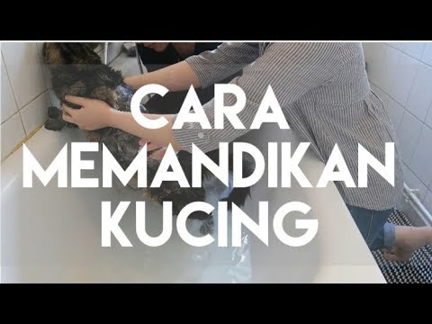 CARA MEMANDIKAN KUCING | MY CATS DIARY #15 (SPECIAL EPISODE 20K SUBSCRIBER