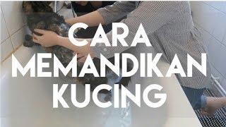 CARA MEMANDIKAN KUCING | MY CATS DIARY #15 (SPECIAL EPISODE 20K SUBSCRIBER