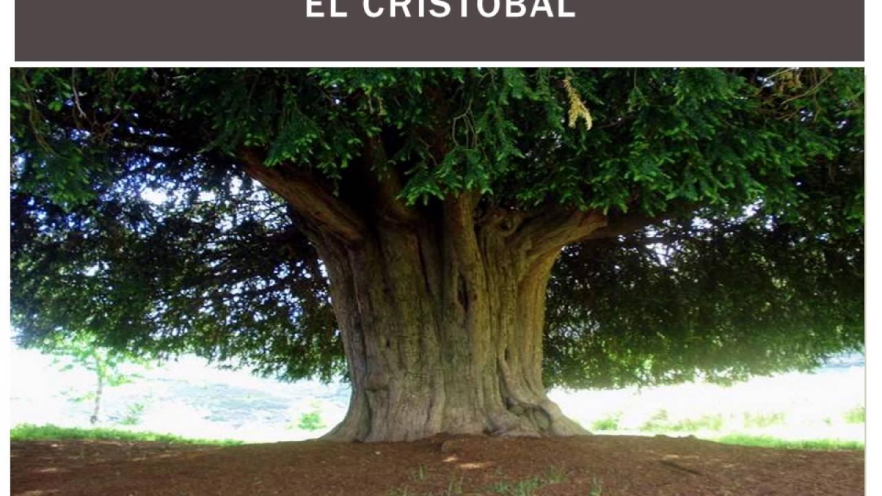En Peligro De Extinción: La Deforestación Y Plantas En Peligro De Extinción Del