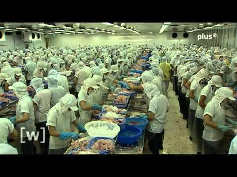 Leere Meere: Fischbestände vor dem Kollaps?
